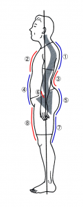 猫背+反り腰姿勢