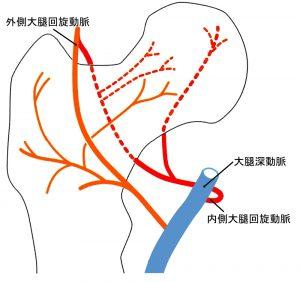 大腿骨頸部の構造
